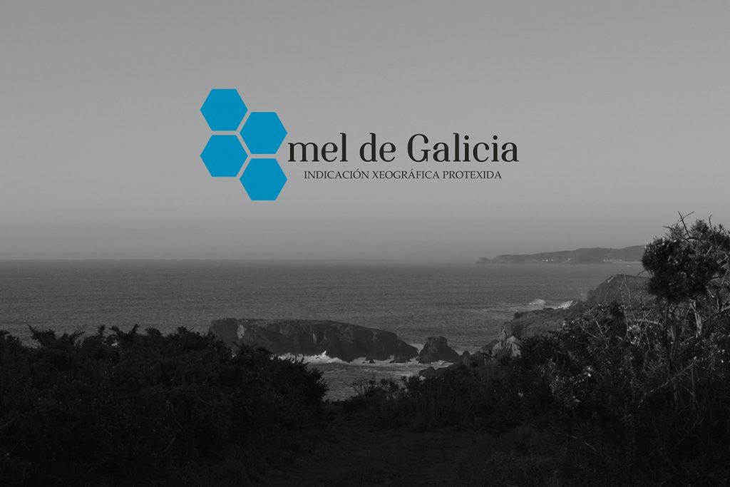 mel-de-galicia
